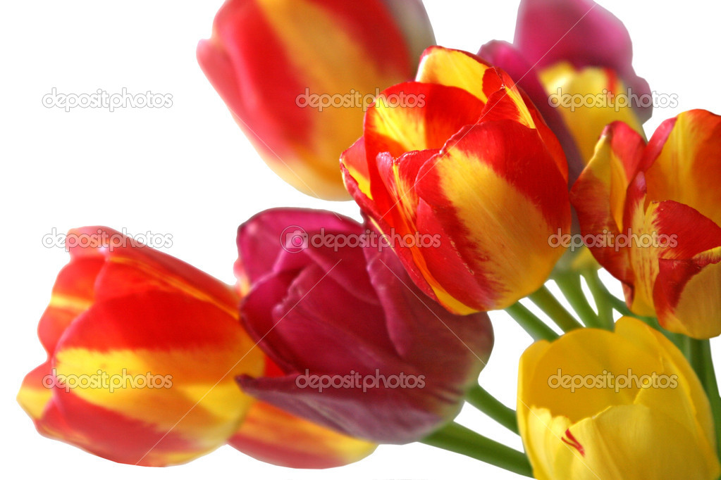 Bouquet of beautiful colorful tulips