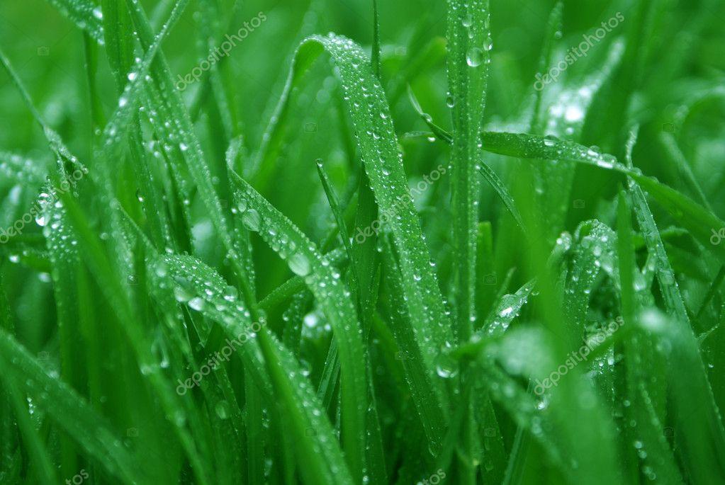 Drops raining on a green grass