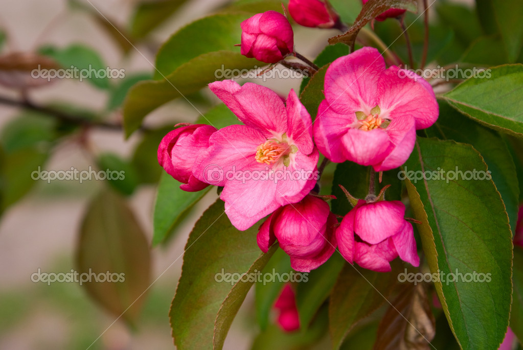 Red flowers of tree