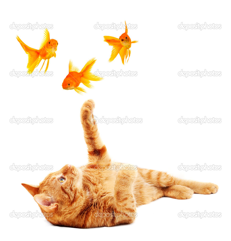 Goldfishes and cat