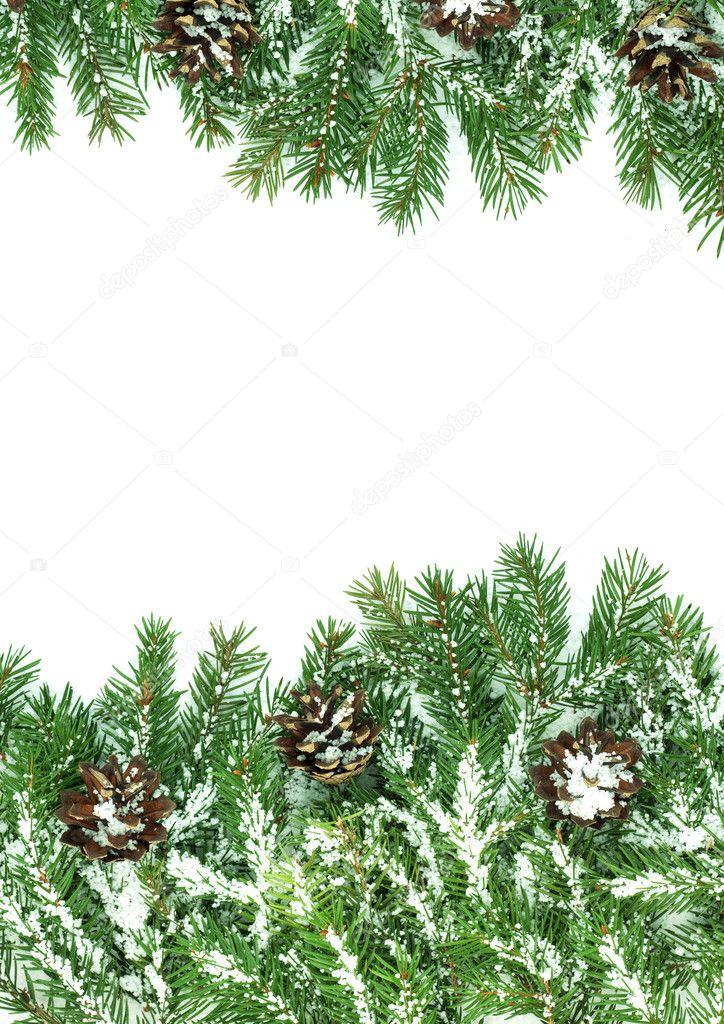 Рамка для открытки ветка сосны со снежком, цветы открытках большие