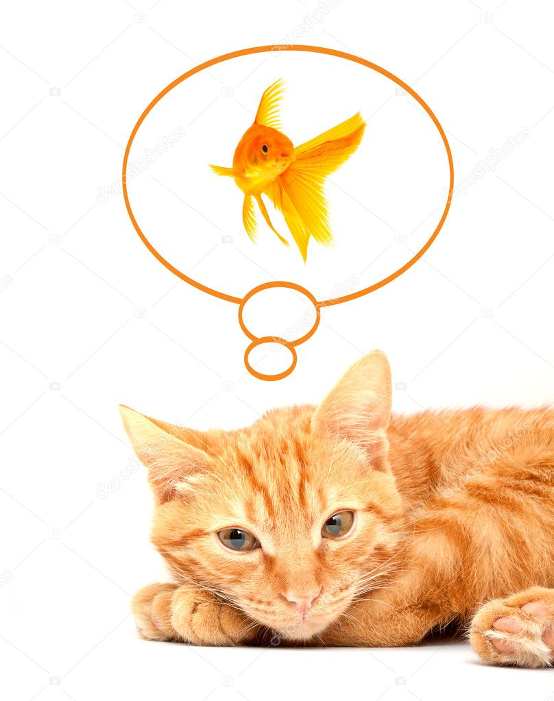 Cat playing with goldfishes isolated on
