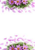 Fotografie květy s okvětními lístky