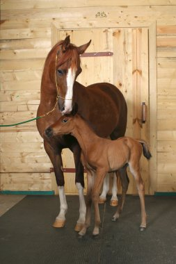 Horse with a foal