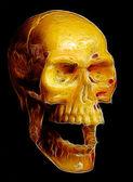 cranio umano isolato su nero