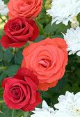 Fényképek Rózsa