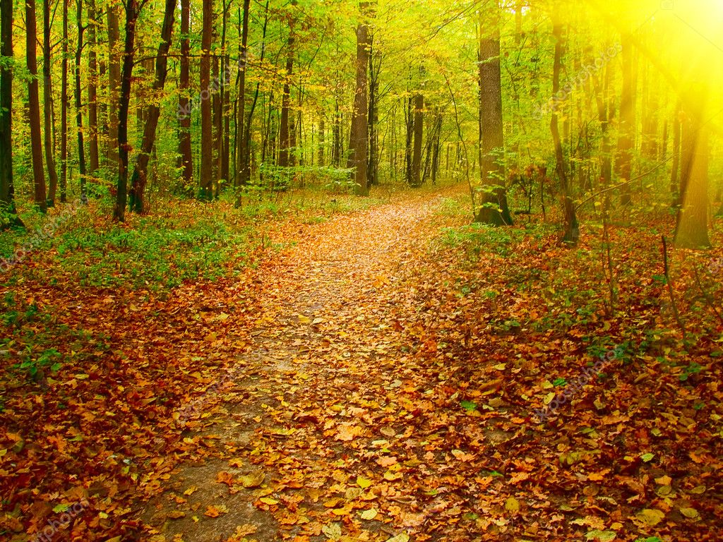 Autumn morning in the deep forest.