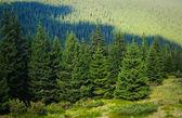 Alpské stromy