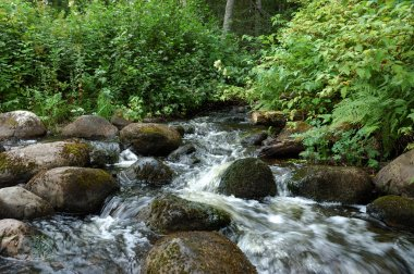 Small creek in the forest