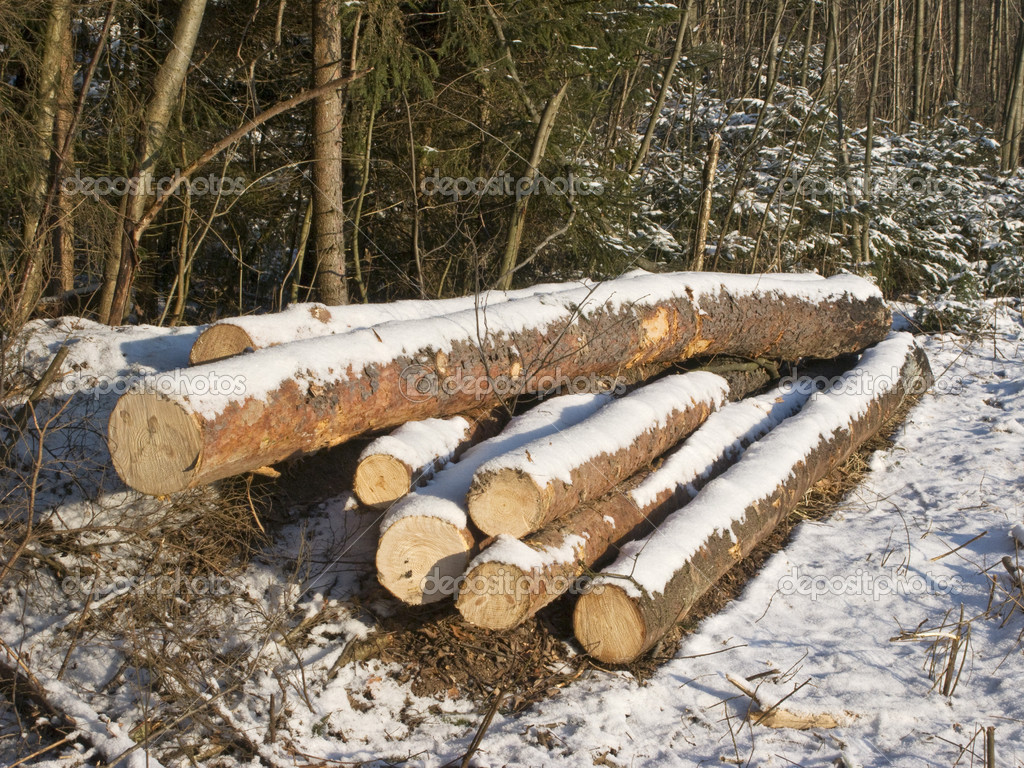 Pile of logs under snow