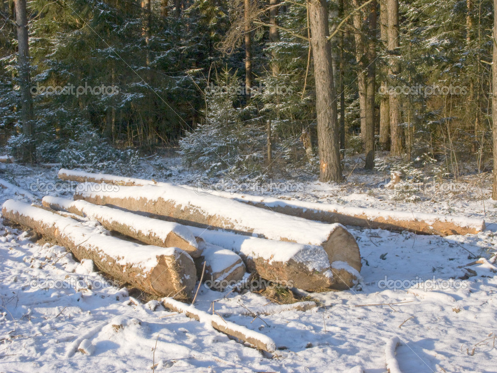 Pile of logs in winter forest