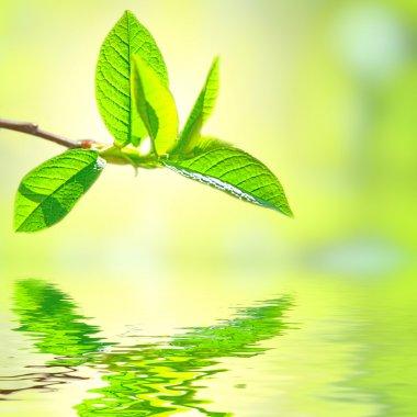 Green leaves stock vector