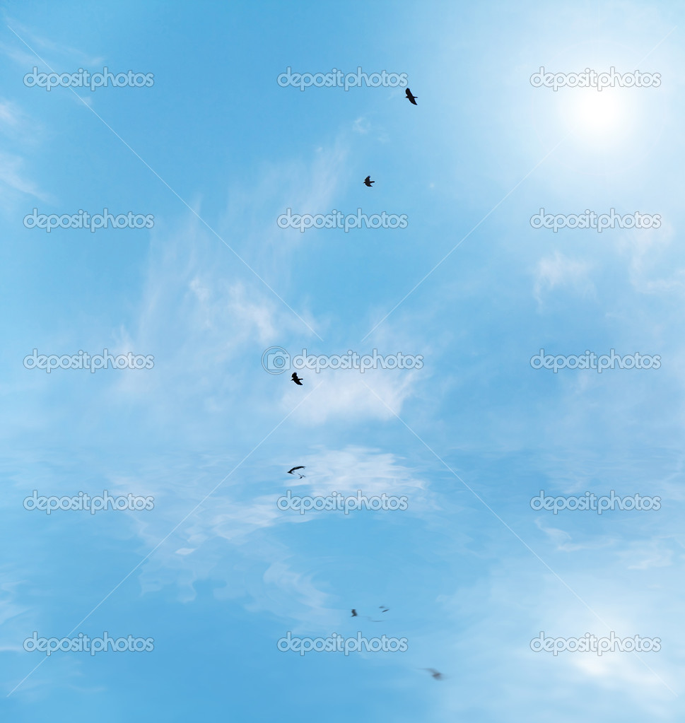 Birds flying over the water