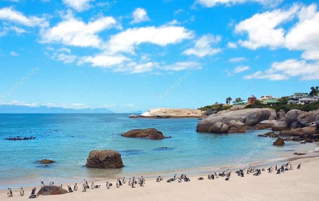Penguins at Boulders Beach. South Africa