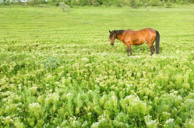Rural landscape with horse