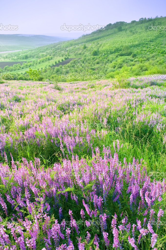Beautiful landscape with violet flowers