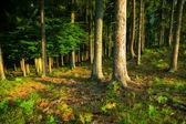Fotografie Wild forest