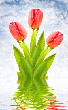 Three red tulips on idyllic background