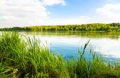 Fotografie grüne Bank eines Sees