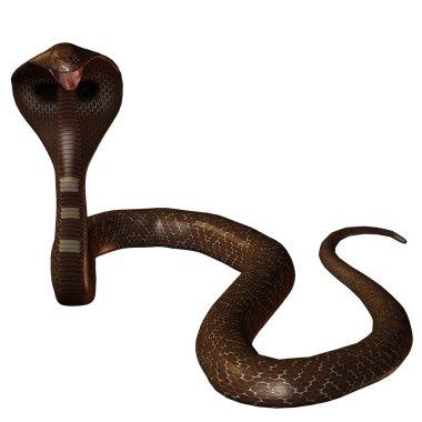 3D snake cobra isolated on a white