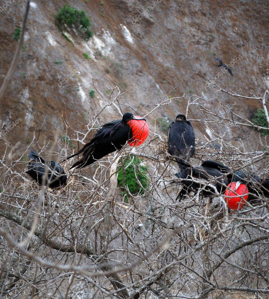 Φωτογραφίες από μεγάλο πουλί άνδρες
