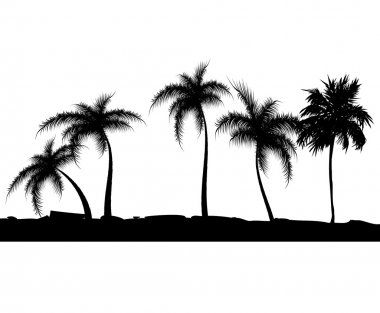 Summer background with palm