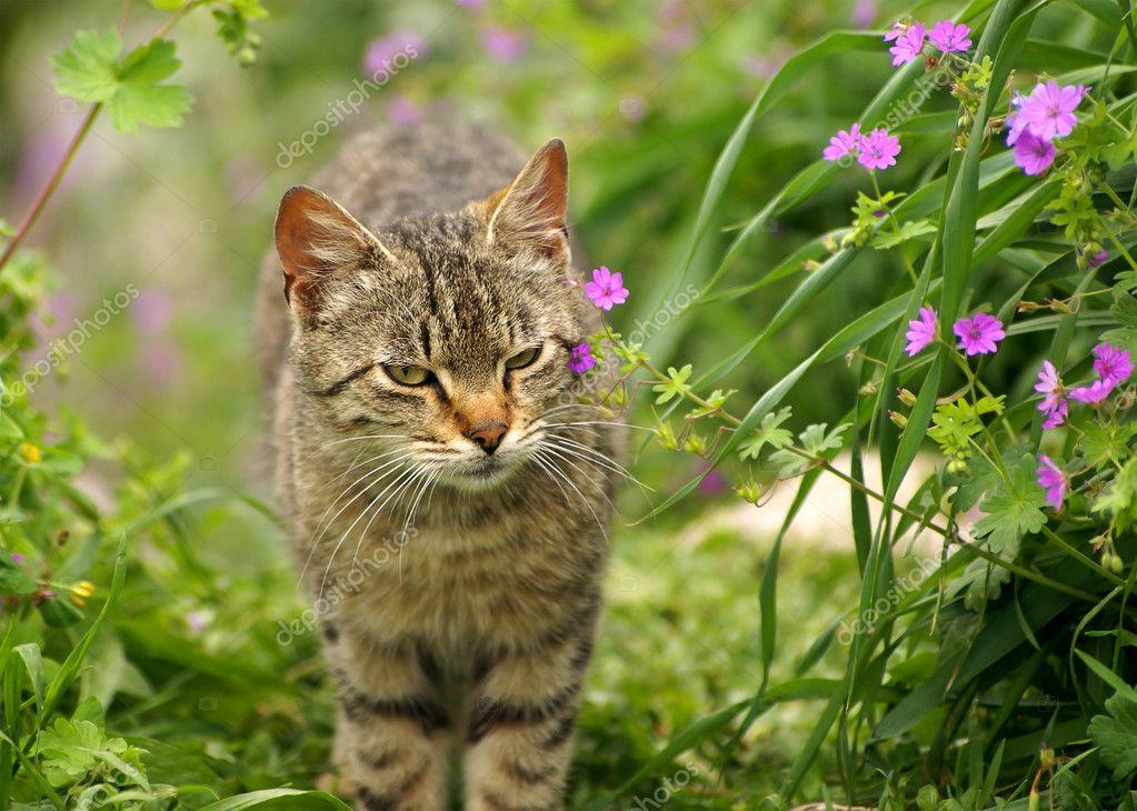3857f67ff7d9 Γκρίζα γάτα στο φυσικό υπόβαθρο ανθίζοντας άνοιξη — Εικόνα από ...