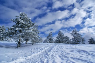Winter landscape D