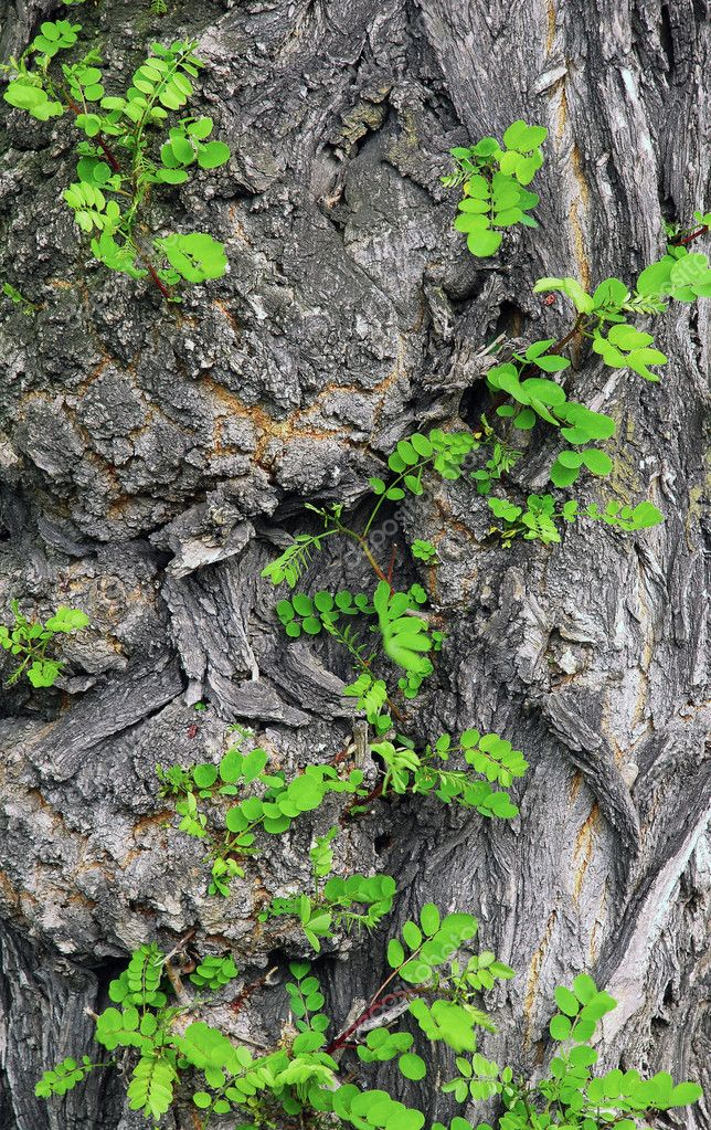 Fresh green leaf on an rough bark