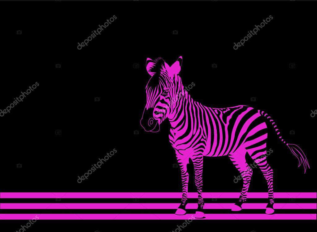 Zebra Rosa Vettoriali Stock Dazdraperma 1290059