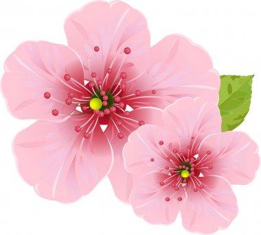 """Картина, постер, плакат, фотообои """"цветы сакуры"""", артикул 2497153"""