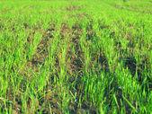 tráva zelená louka krajina