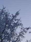 foresta di alberi dinverno