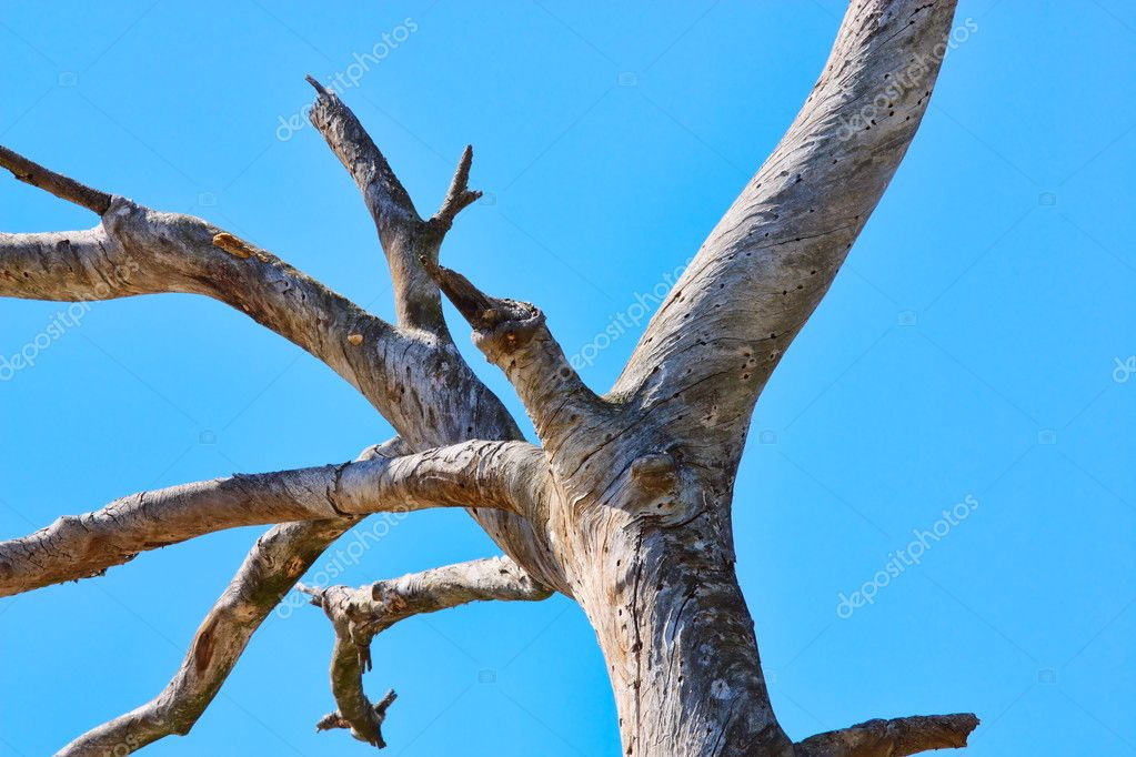 An old dry tree against the blue sky