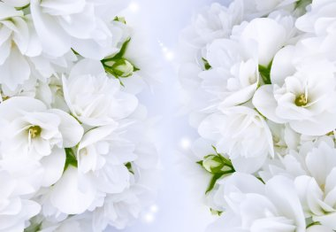 Beautiful White Jasmine Flowers