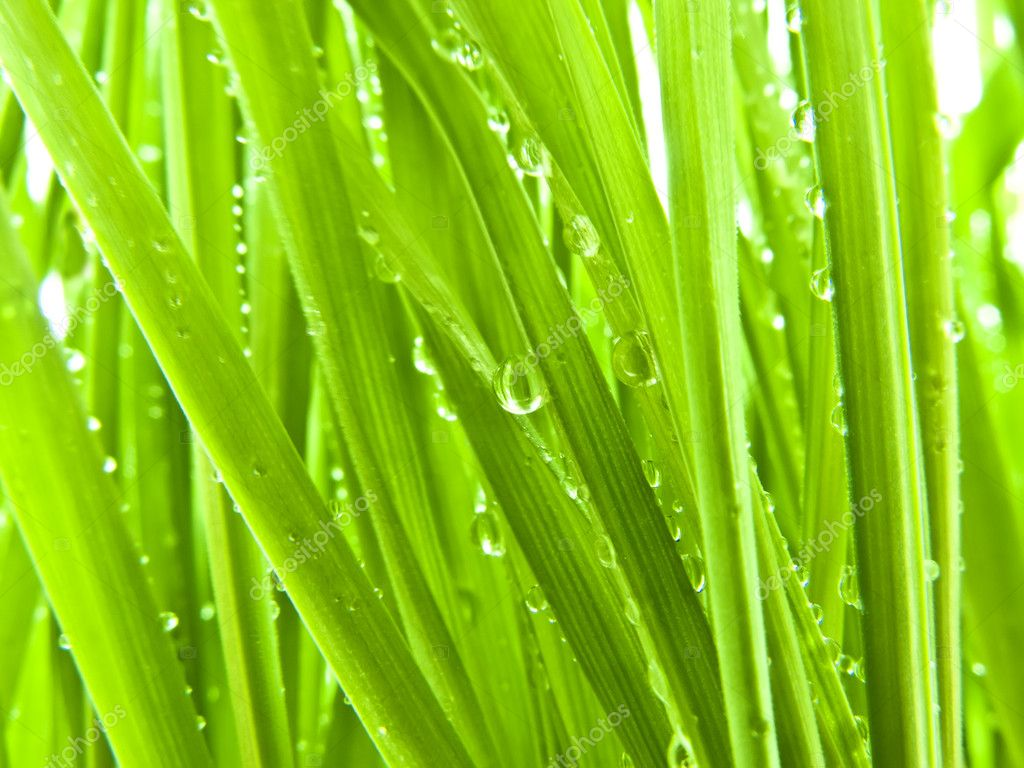 Green Grass on My Lawn