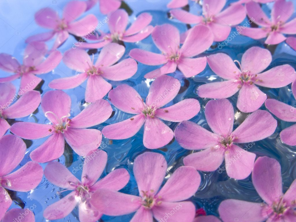 Floating Summer Flowers