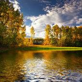 Panorama z lesa v slunečný letní den