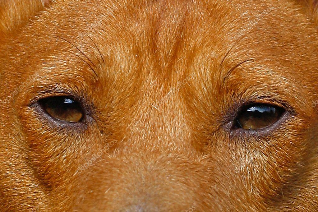 Wild eyes