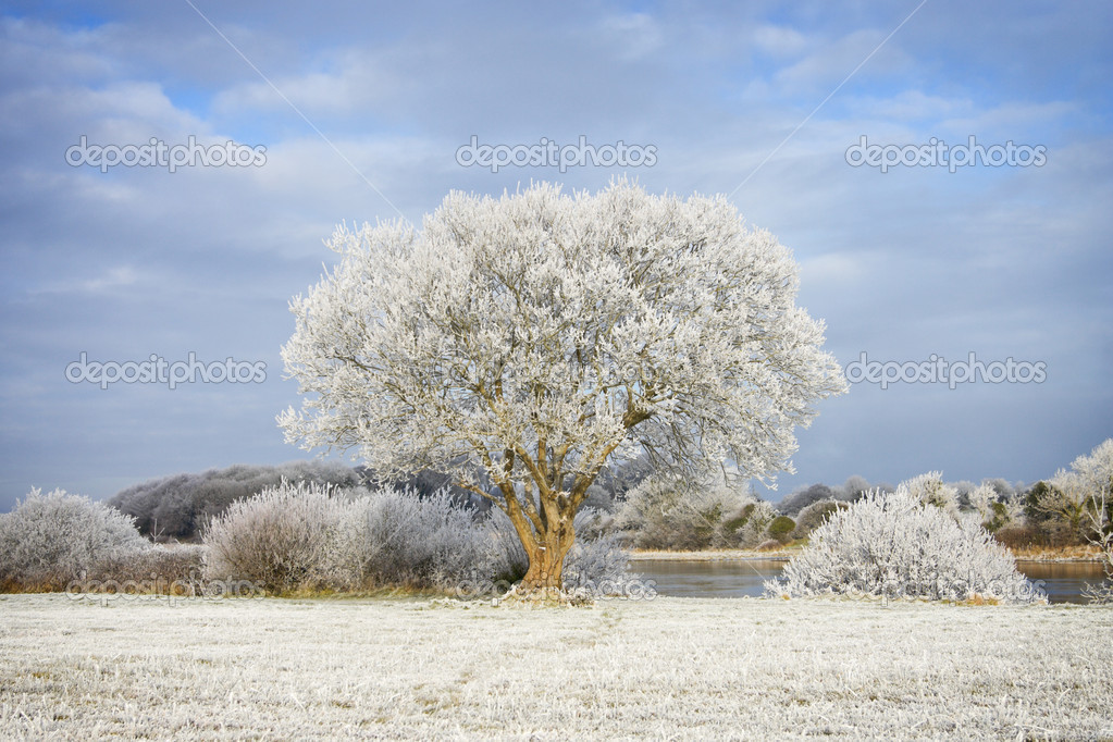Trees covered by frost