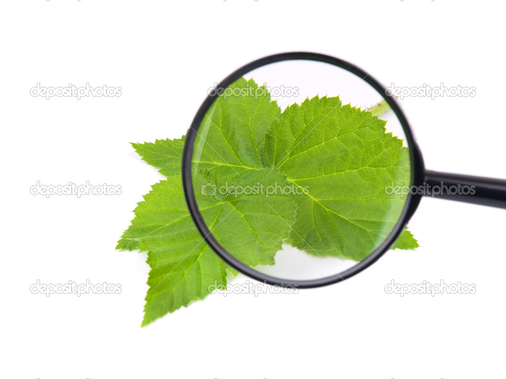 Loupe and green leaves