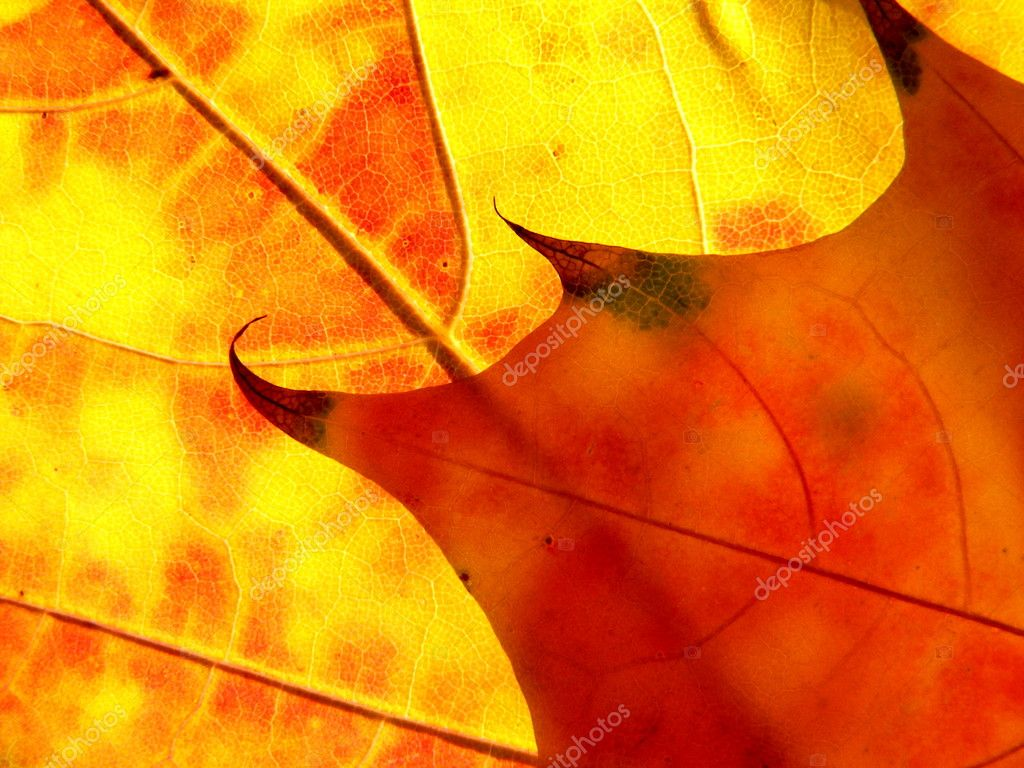 Orange and red leaves like flame