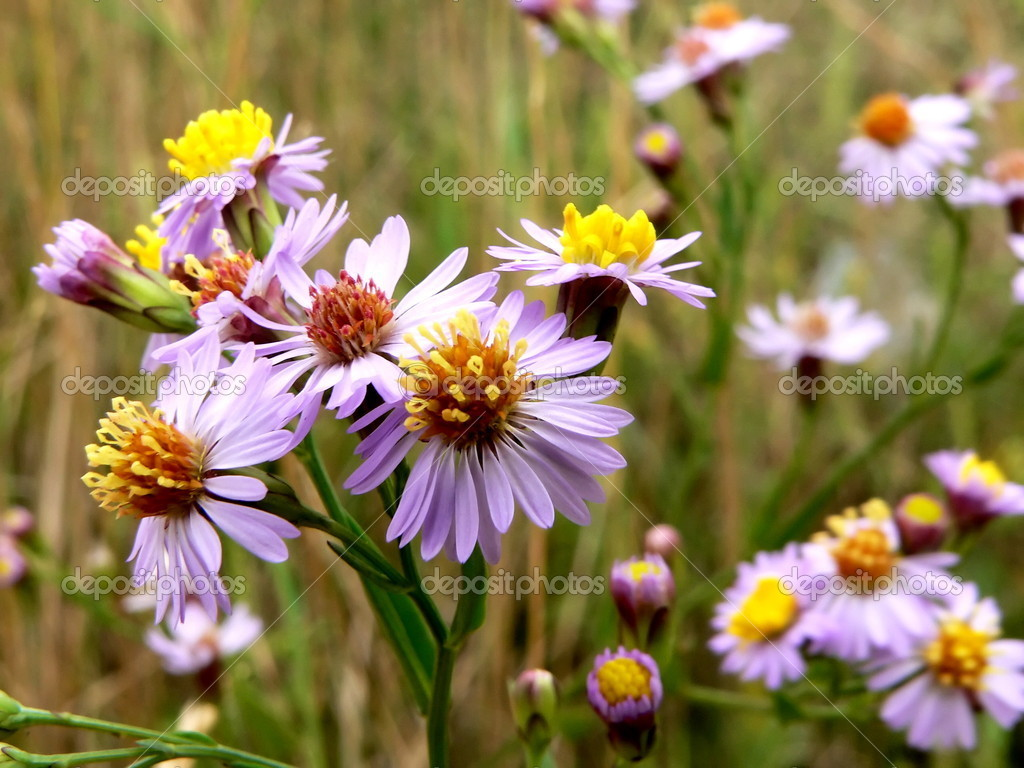 Flowers with lilac petal