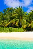 Moře, pláže a džungle