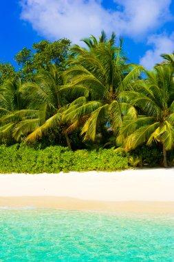 Sea, beach and jungle