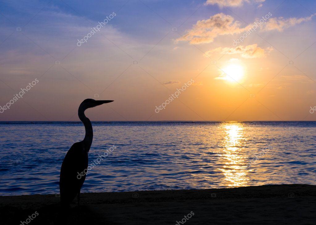Heron on a tropical beach, sunset