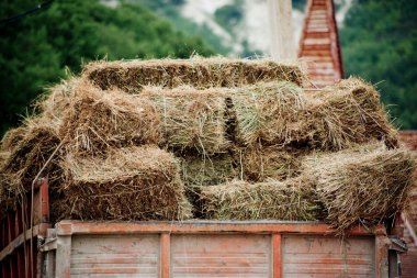 Hay in lorry