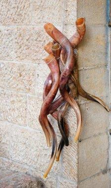 Bunch of shofars, or Jewish horns