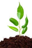 Fényképek növény-talaj