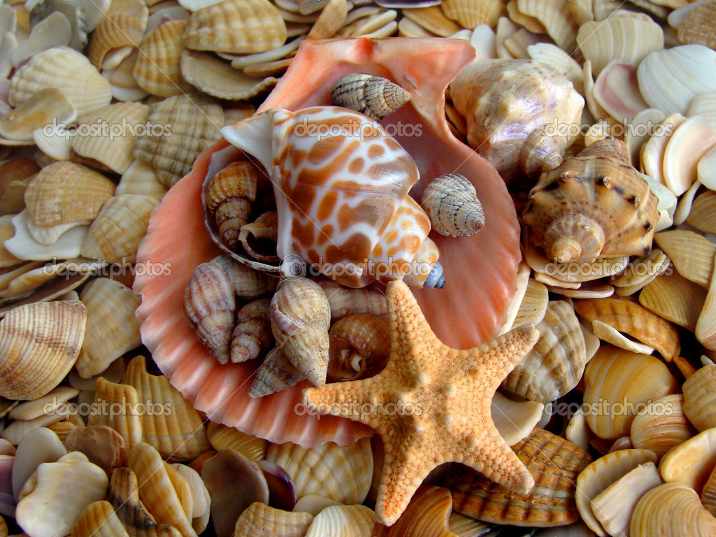 Cockleshell and starfishes